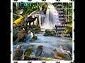 Kompilasi Masteran Burung  Mp3 - Mp4 Download