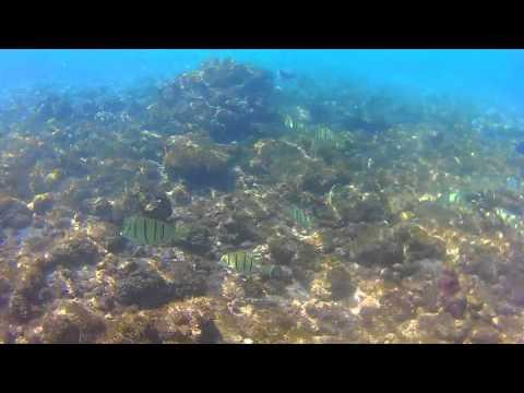 Snorkeling Lahaina Hawaii
