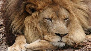 Joseph Lion Has Eye Surgery