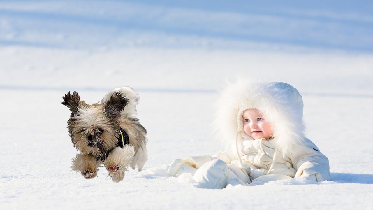Životinje i sneg  - Page 6 Maxresdefault
