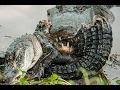 King of Crocodile 2016 (Crocodile Documentary)