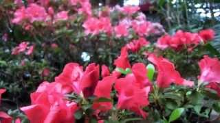 Выставка цветов в оранжереях