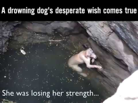 "A drowning dog""s desperate wish comes true"