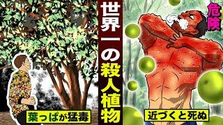 【危険】世界一の殺人植物…樹木の全て猛毒。近づくと死ぬ。