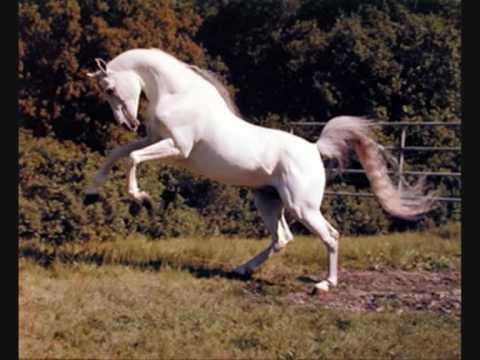 Tribute: Grey Horses