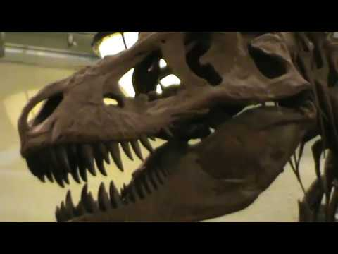 SAURISCHIAN HALL QUICK TOUR - AMNH - NEW YORK - video by Rogerio Favilla