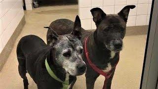 Хозяева зашли в зоомагазин, заперли в туалете двух старых собак и сбежали!