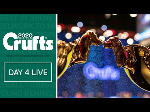 Day 4 Live | Crufts 2020