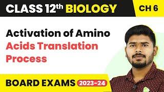 Activation of Amino Acids Translation Process | Class 12 Biology