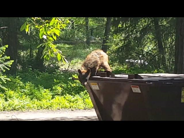 Bear back for more