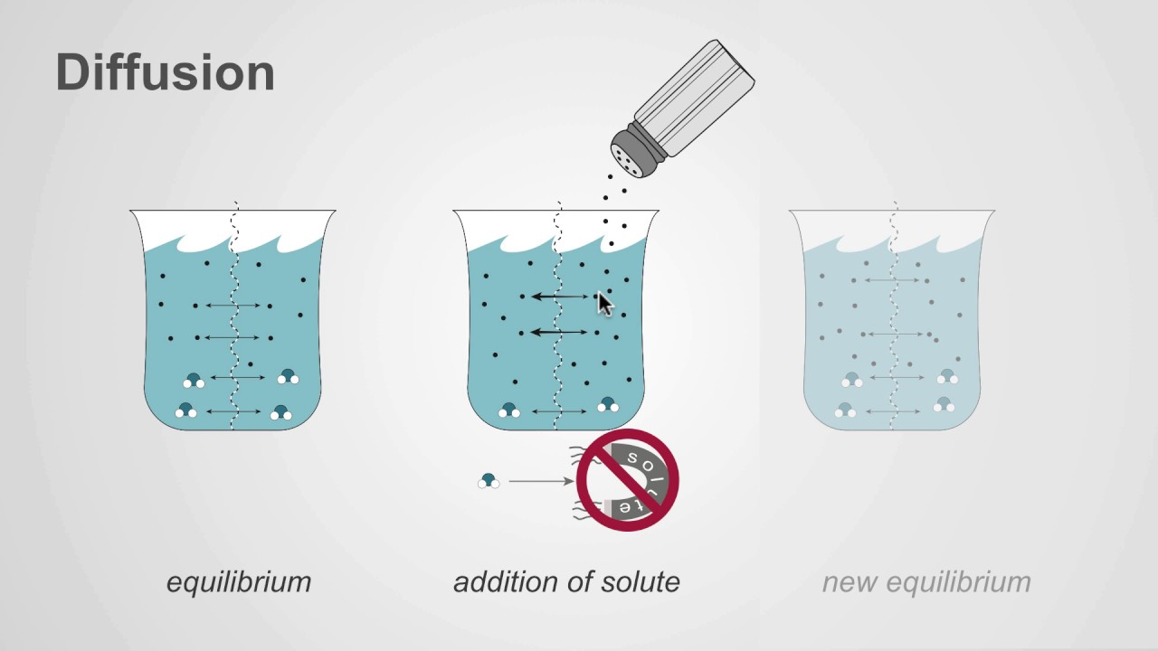 hight resolution of The difference between osmosis and diffusion - YouTube