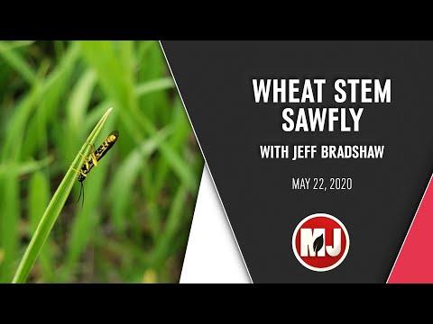 Wheat Stem Sawfly | Jeff Bradshaw | May 22, 2020