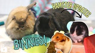 CRAZY BUNNIES + Hamster updates!