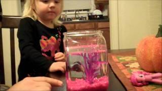 DEADLIEST BETTA FISH EVER!!!