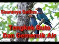 Audio Masteran Burung Tengkek Buto Dengan Gemercik Air  Mp3 - Mp4 Download