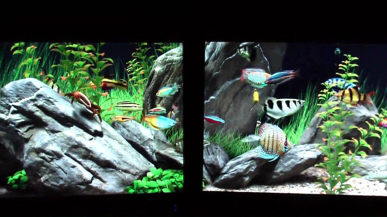 Dream Aquarium On Dual 22 39 S Youtube
