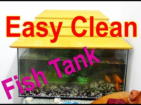 How to Clean an Aquarium Very Easy