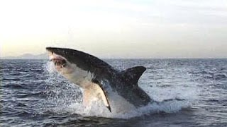 Рейтинг 10 самых опасных акул. Документальный фильм. Часть 2