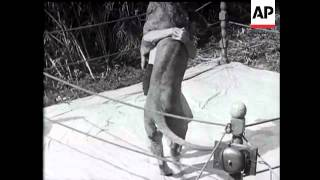 Wrestling With A Lion - 1930