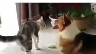 Прикол/разборки кошки и собаки