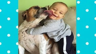 Dog loves baby ★ Endless funny moments Baby with Boxer Dog