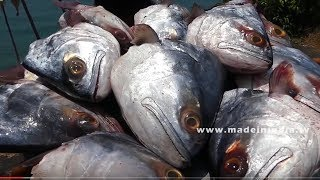 15 BIG BBQ FISH HEADS | MAKING OF Barbeque Fish Heads