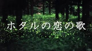 太陽族 - ホタルの恋の歌