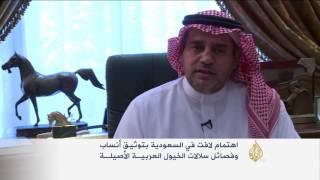 اهتمام سعودي بتوثيق أنساب وسلالات الخيول العربية الأصيلة