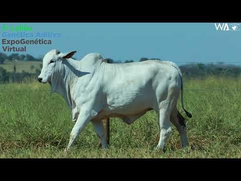 LOTE 26 - REMC A 2017 - 3º Leilão Genética Aditiva Expogenética 2020