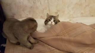 �������� ���� Марта и Басик не дают убирать постель ������