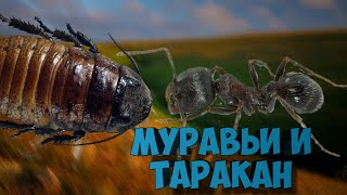 Муравьи Messor Structor VS Мадагаскарский таракан.