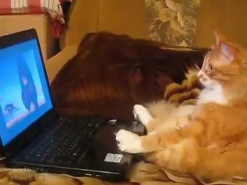 Смешные гифки кот и компьютер