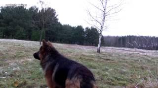 [Урок 15] Как научить собаку команде МЕСТО