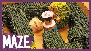 햄스터 미로정원-황금드롭스를 찾아서 (hamster's Maze Garden)