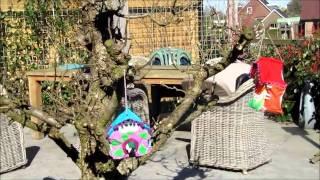 Hanging Houses Birdhouse 2