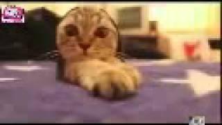 Смешные забавные коты кошки ролики с кошками Funny Cat Cats Animal 2014 часть 8