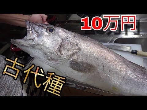 超希少な高級魚をさばいて胃袋などを食べまくってみた。