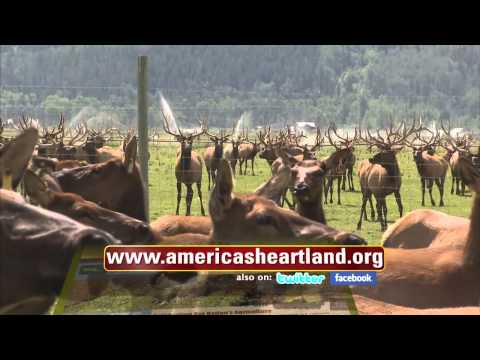 Elk and Bison Ranch - Ranching Round-Up: American's Heartland