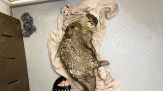 カワウソがお風呂の栓を抜くことを覚えてしまったので自分でタオルドライさせた