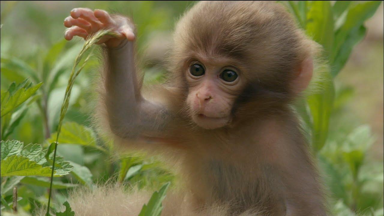 Cute Newborn Baby Hd Wallpapers Cute Baby Monkey Eats And Sleeps Youtube
