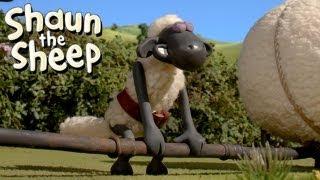 Video Shaun the Sheep - Championsheeps - Weightlifting (OFFICIAL VIDEO) download MP3, 3GP, MP4, WEBM, AVI, FLV Juli 2018
