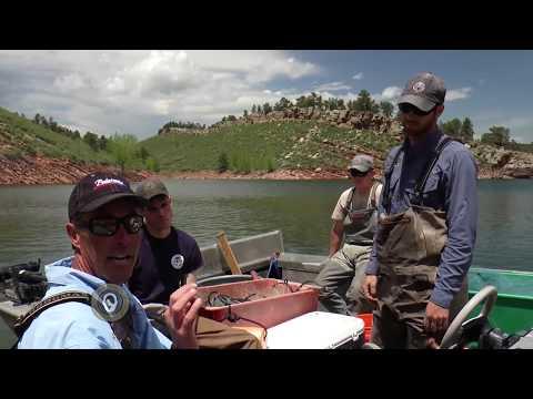 CPW Fish Sampling