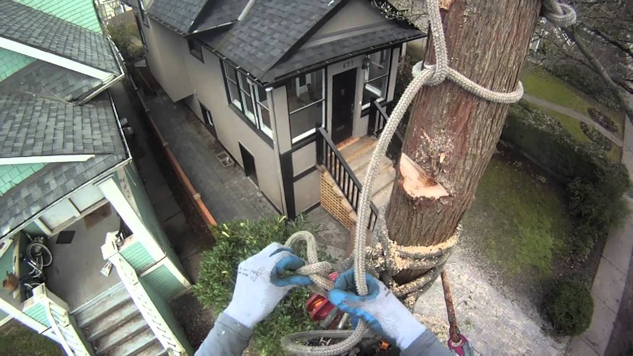 How To Rig Sections Of Trunk Onto Itself Arborist