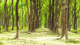 Forest Background Video Effects 4 full HD Free Stock video Templates Animation 1080p akk music YouTube