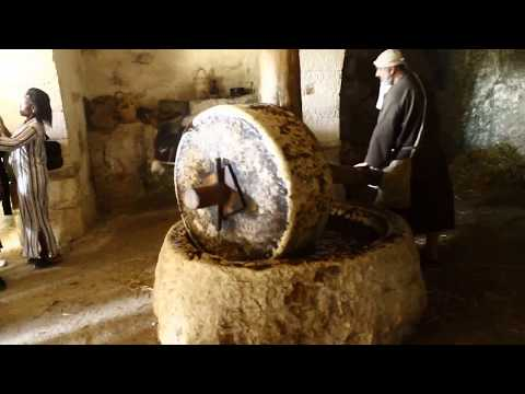 Israel Tour 2015 - Nazareth Village Olive Oil Pressing