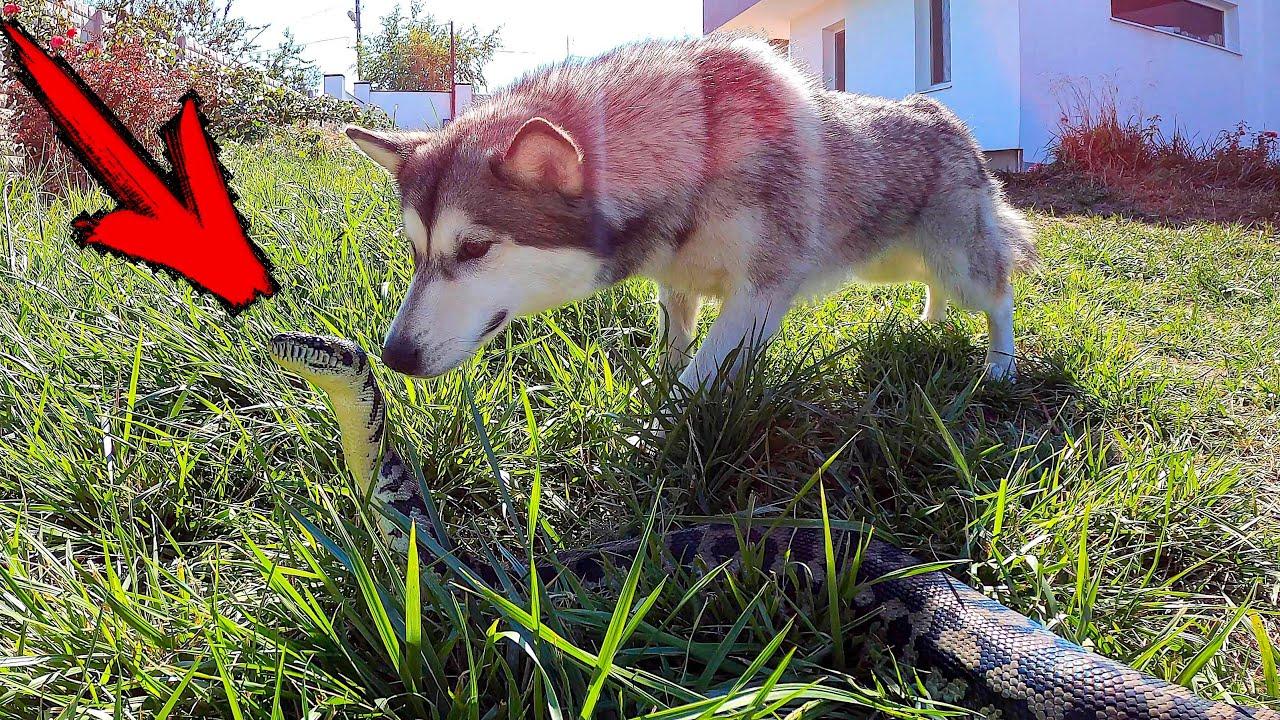 Собака нашла ЗМЕЮ во Дворе