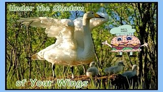 Under The Shadow Of Your Wings I will find a hiding place w/Lyrics