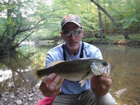 Jack Attack !!     Chain Pickerel Creek Fishing
