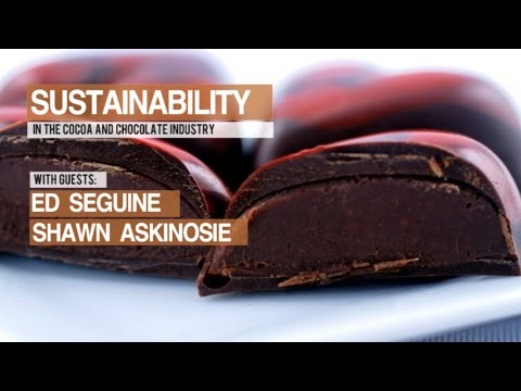 Chocolate Masters Hangout #10:  Sustainability  in the cocoa and chocolate industry.