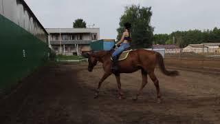 Урок верховой езды / Тренировка всадника - учебная рысь, галоп / Часть 2.